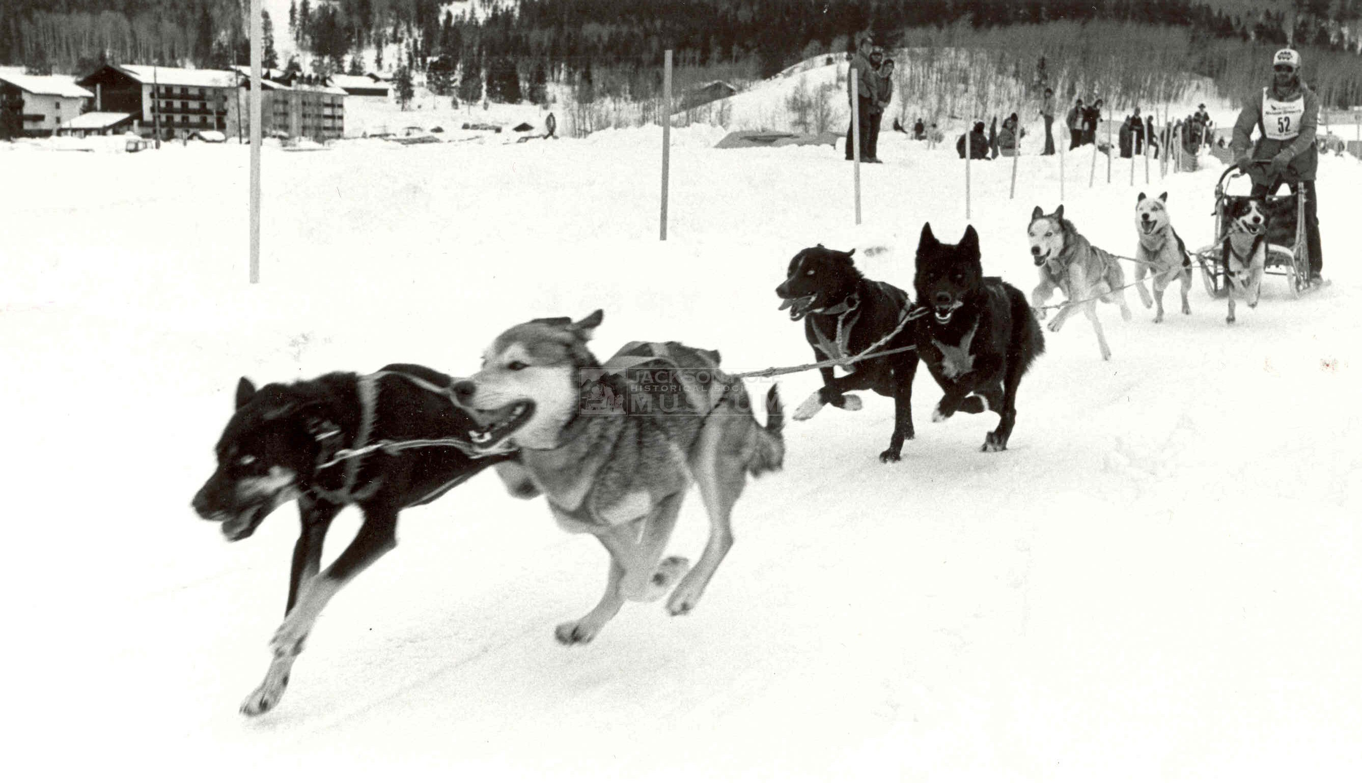 Sled Dog Team Drawing